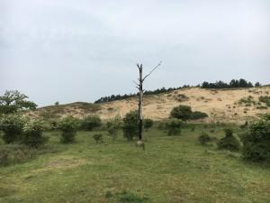 1 Een zandige zuidhelling in Kenia