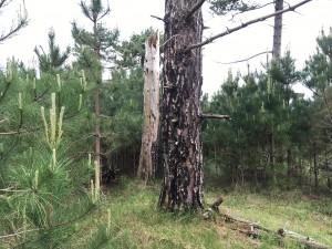 REstanten brand en Kenia, met jonge nieuwe bomen